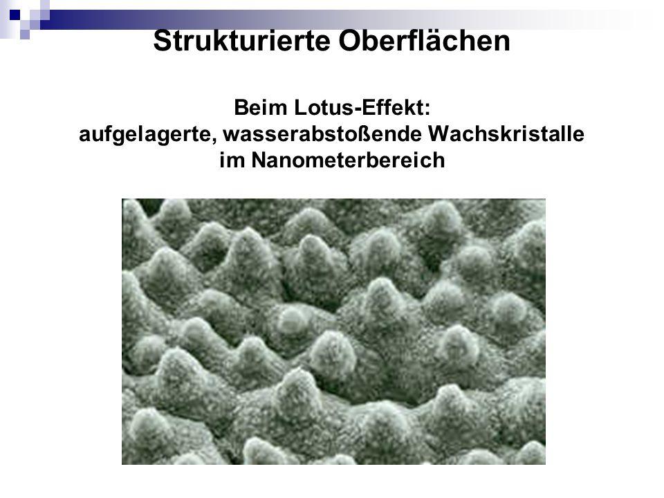 Strukturierte Oberflächen Beim Lotus-Effekt: aufgelagerte, wasserabstoßende Wachskristalle im Nanometerbereich