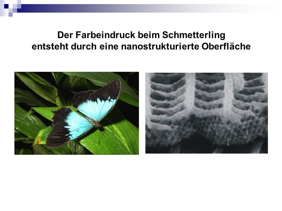 Der Farbeindruck beim Schmetterling entsteht durch eine nanostrukturierte Oberfläche