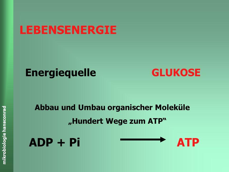 LEBENSENERGIE ADP + Pi ATP Energiequelle GLUKOSE