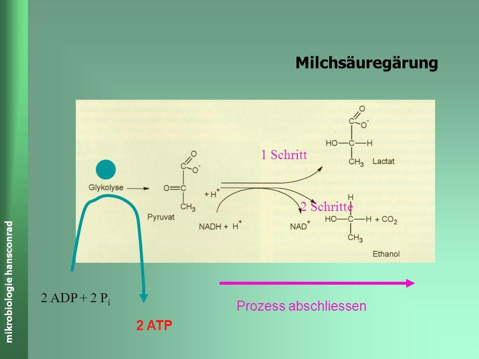 Milchsäuregärung 1 Schritt 2 Schritte 2 ADP + 2 Pi