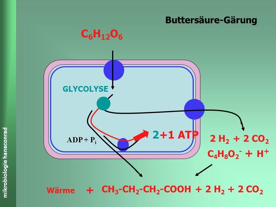 C6H12O6 2+1 ATP + Buttersäure-Gärung 2 H2 + 2 CO2 C4H8O2- + H+