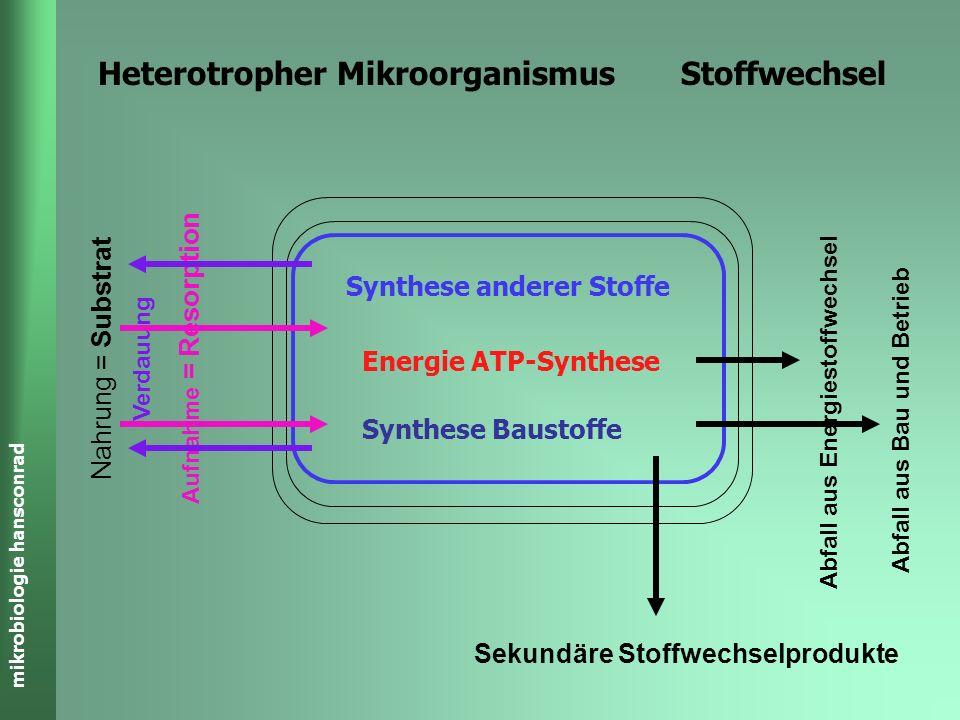 Heterotropher Mikroorganismus Stoffwechsel