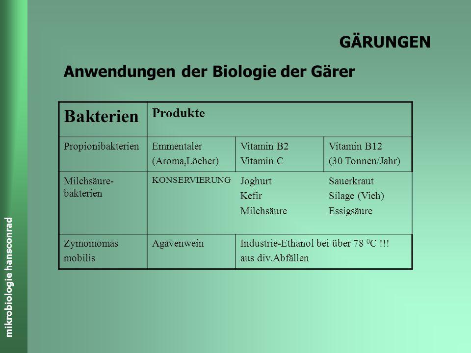 Bakterien GÄRUNGEN Anwendungen der Biologie der Gärer Produkte