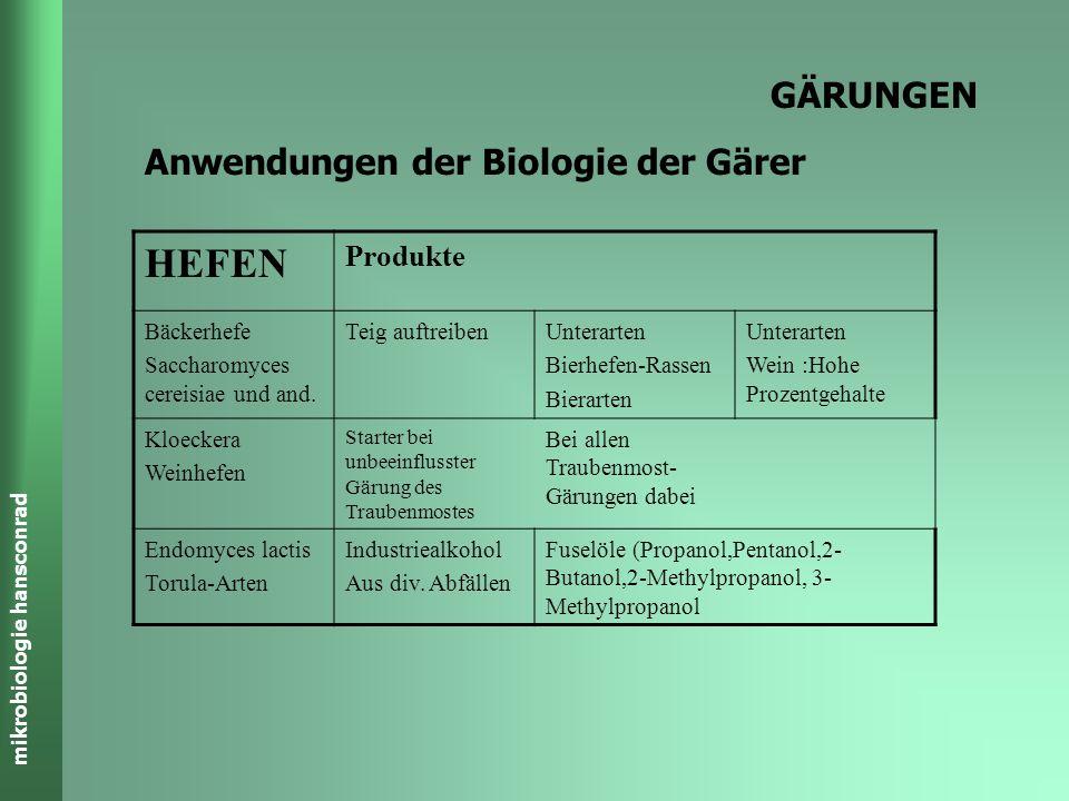HEFEN GÄRUNGEN Anwendungen der Biologie der Gärer Produkte Bäckerhefe