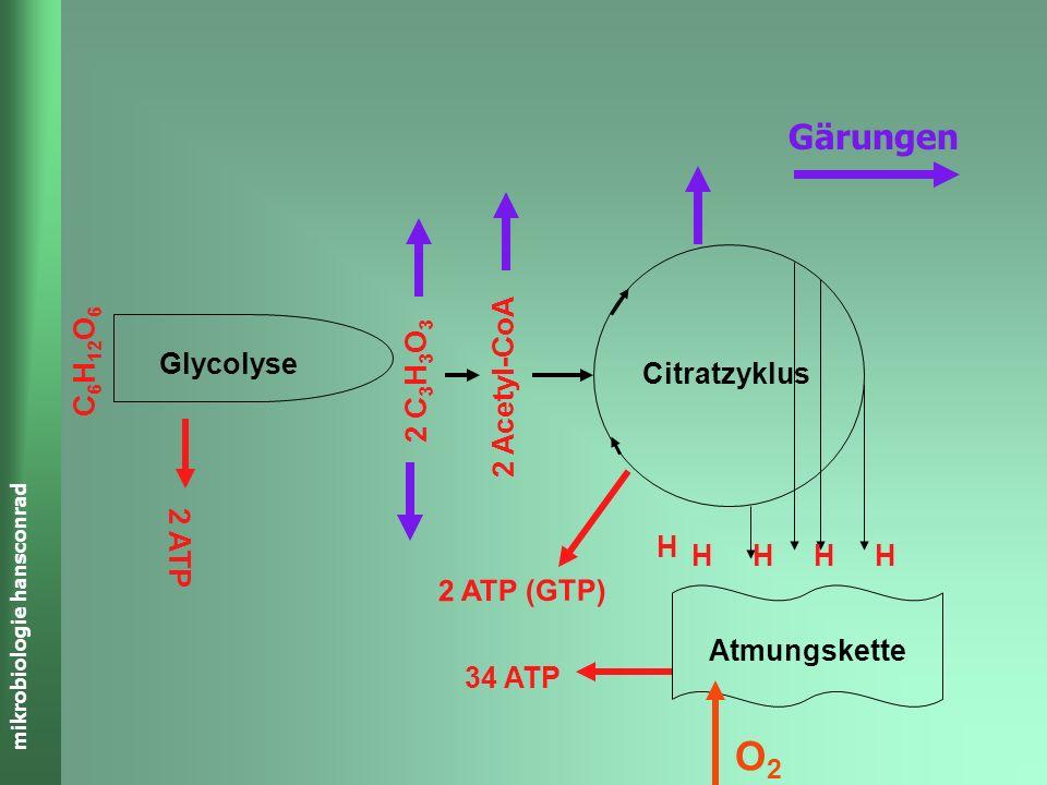 O2 Gärungen Citratzyklus Glycolyse C6H12O6 2 C3H3O3 2 Acetyl-CoA 2 ATP