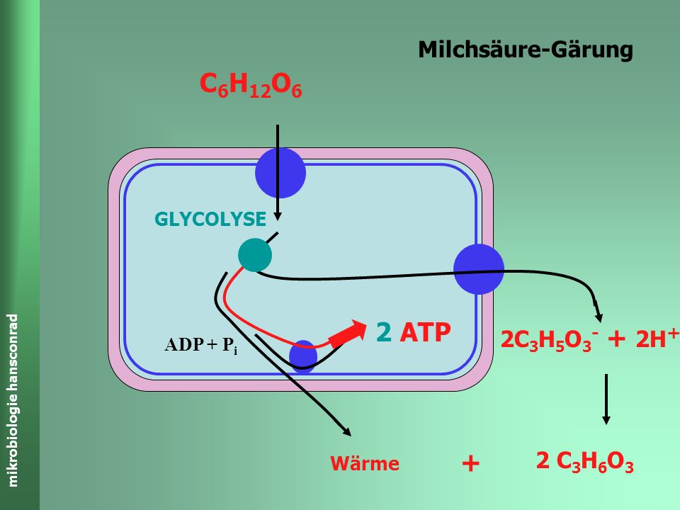 C6H12O6 2 ATP + Milchsäure-Gärung 2C3H5O3- + 2H+ 2 C3H6O3 GLYCOLYSE