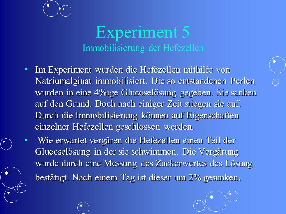 Experiment 5 Immobilisierung der Hefezellen