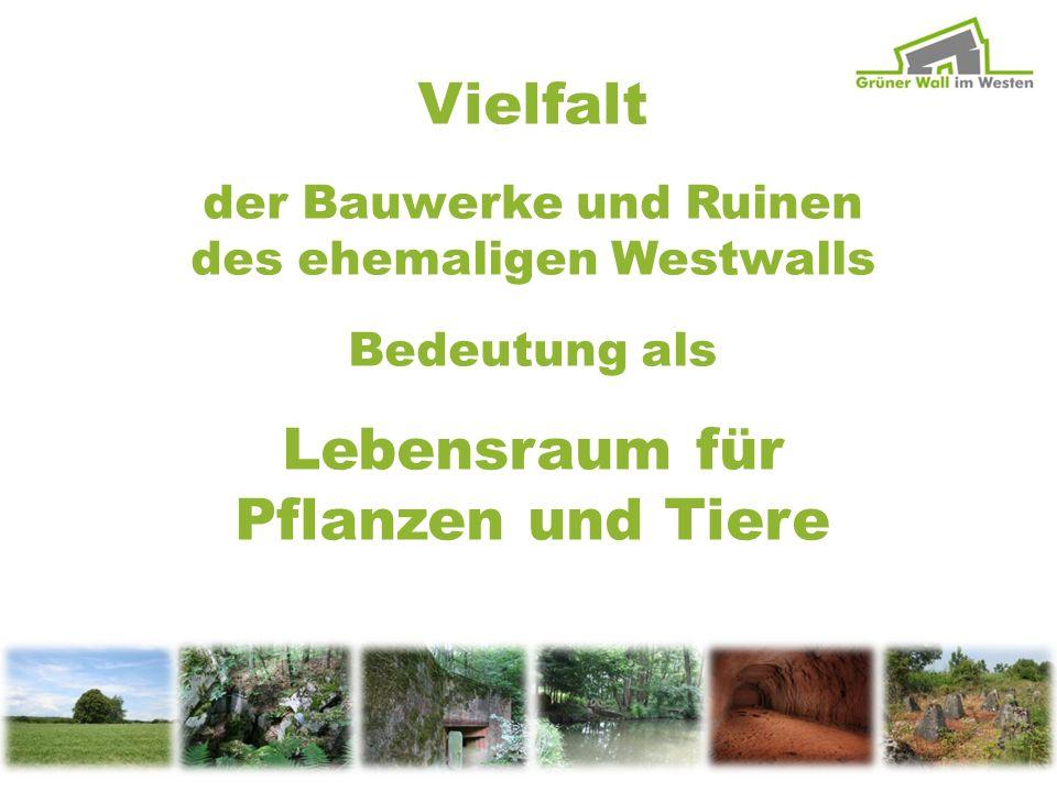 Vielfalt Lebensraum für Pflanzen und Tiere