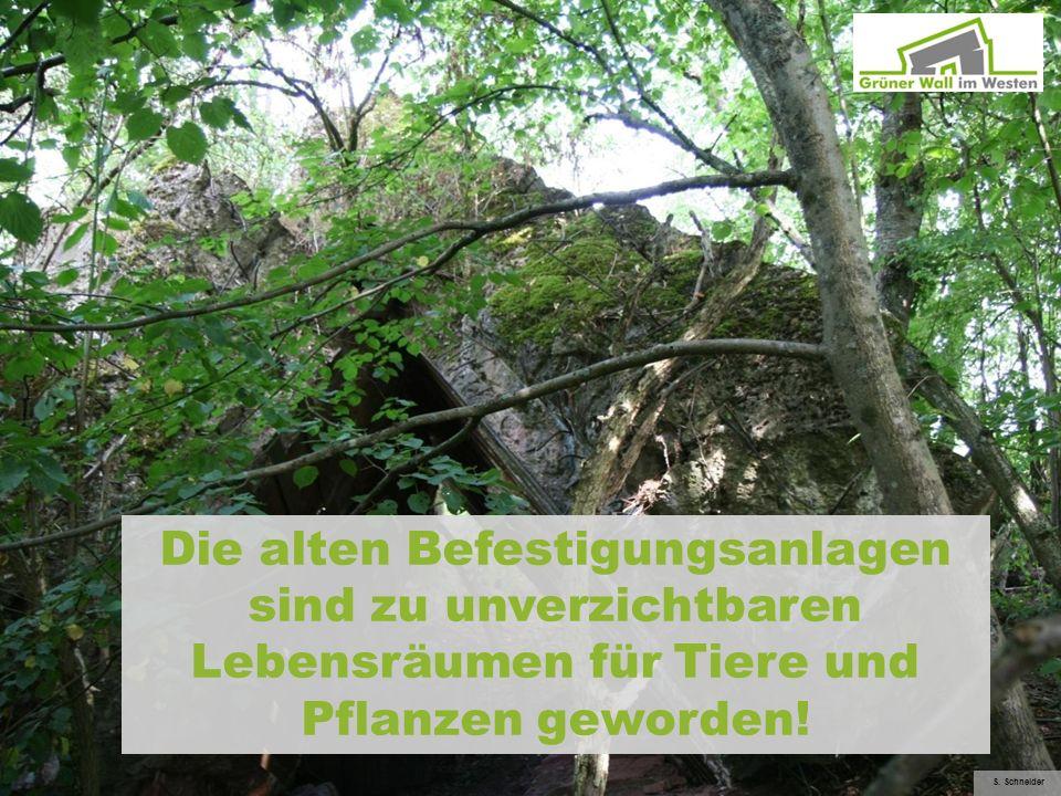 Die alten Befestigungsanlagen sind zu unverzichtbaren Lebensräumen für Tiere und Pflanzen geworden!