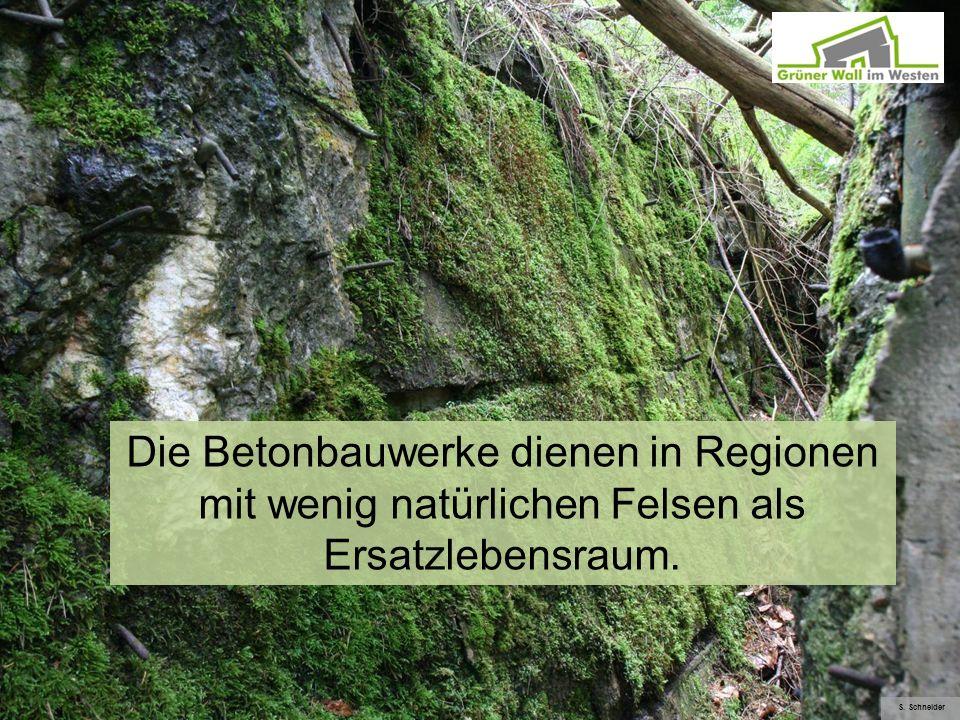 Die Betonbauwerke dienen in Regionen mit wenig natürlichen Felsen als Ersatzlebensraum.