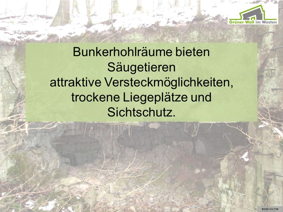 Bunkerhohlräume bieten Säugetieren