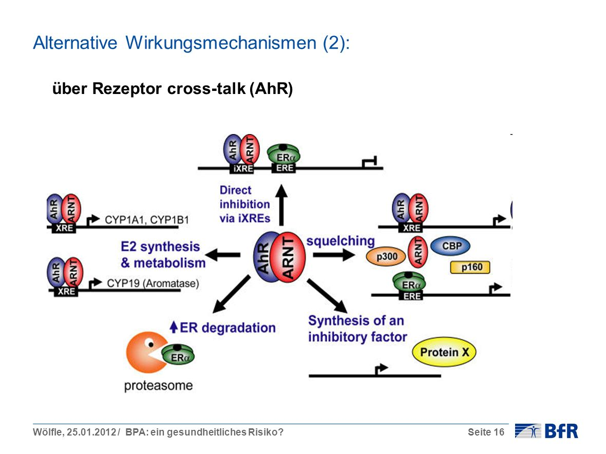 über Rezeptor cross-talk (AhR)