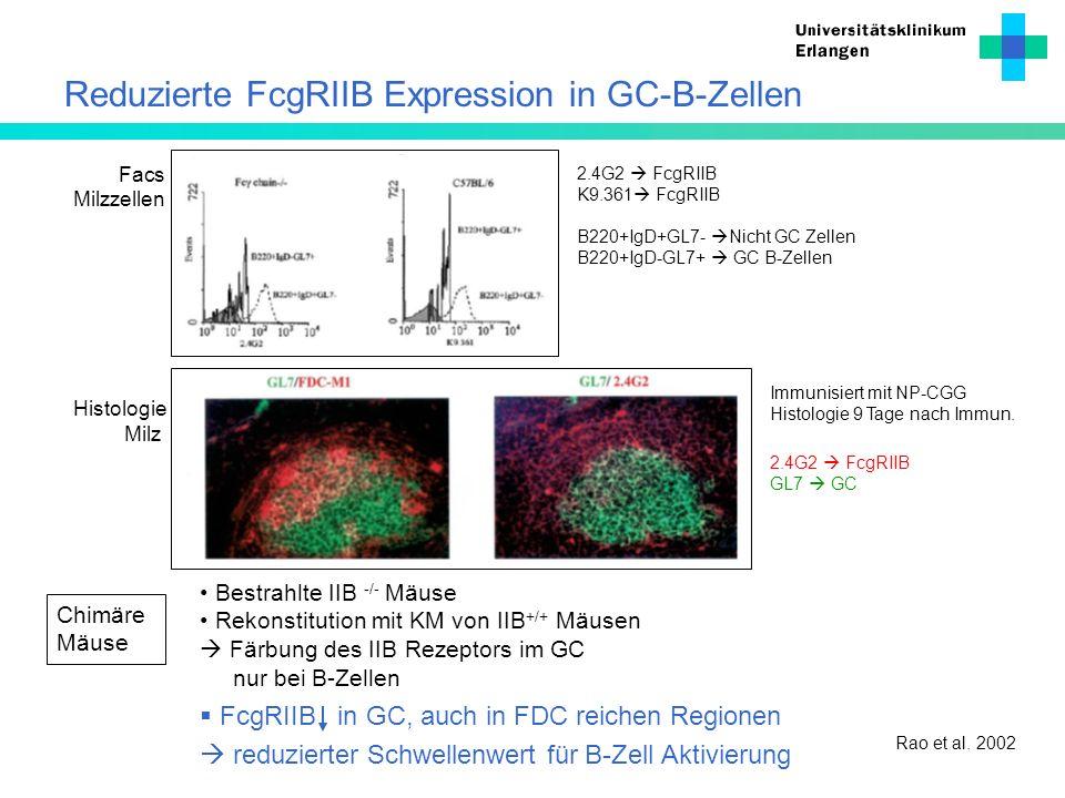 Reduzierte FcgRIIB Expression in GC-B-Zellen