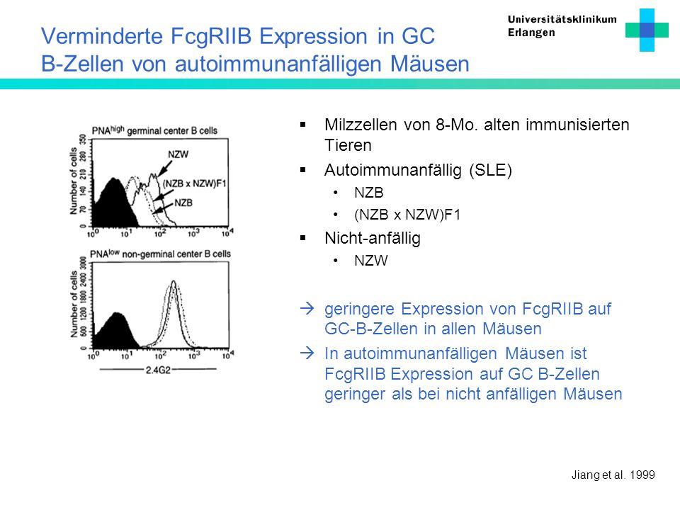 Verminderte FcgRIIB Expression in GC B-Zellen von autoimmunanfälligen Mäusen