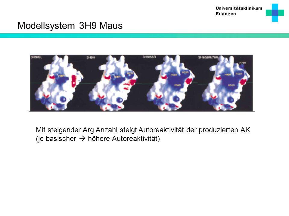 Modellsystem 3H9 MausMit steigender Arg Anzahl steigt Autoreaktivität der produzierten AK.
