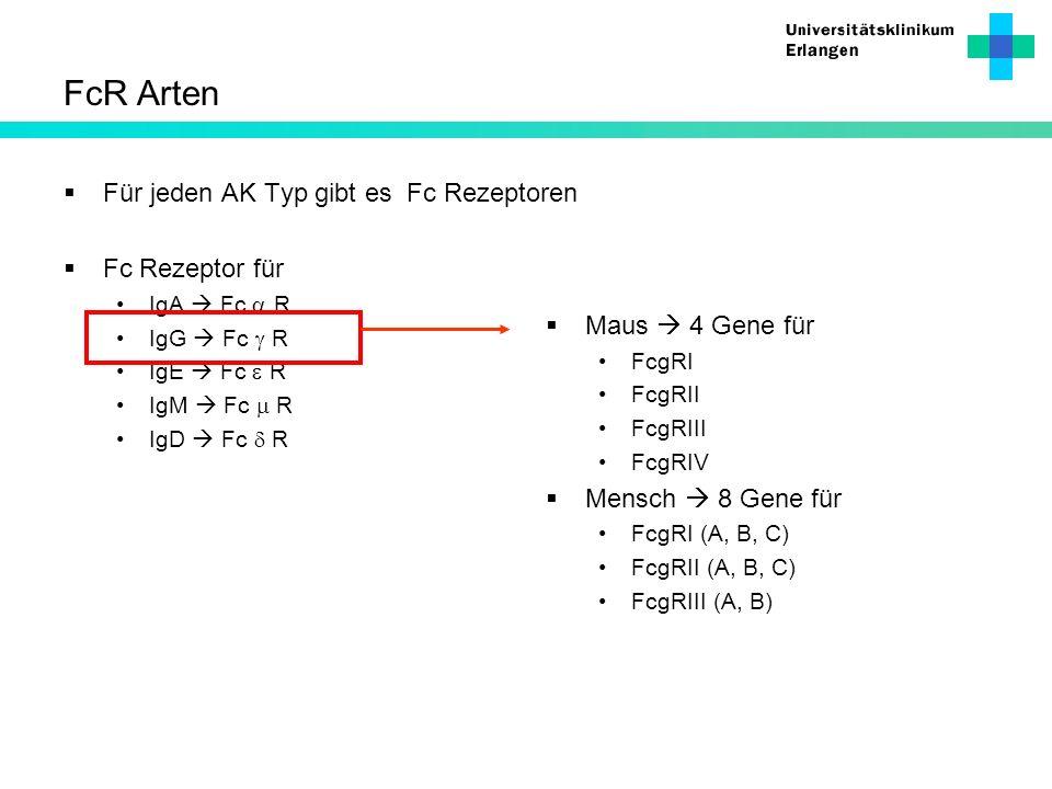 FcR Arten Für jeden AK Typ gibt es Fc Rezeptoren Fc Rezeptor für