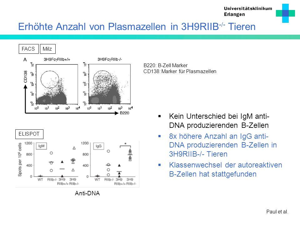 Erhöhte Anzahl von Plasmazellen in 3H9RIIB-/- Tieren