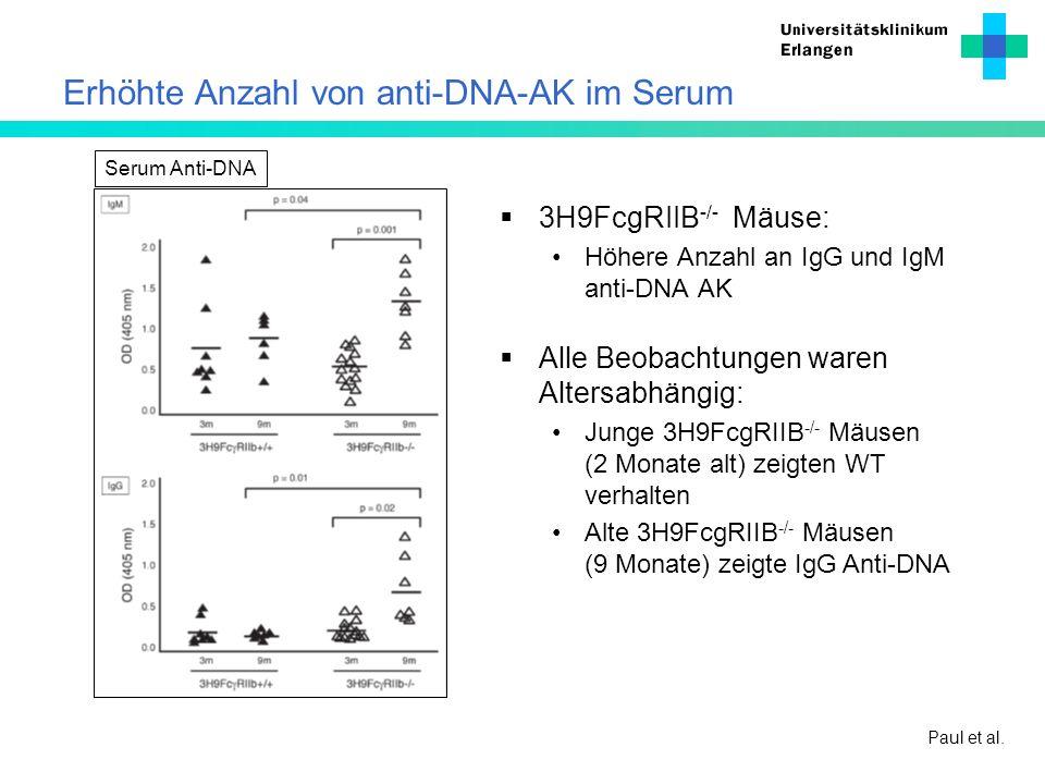 Erhöhte Anzahl von anti-DNA-AK im Serum