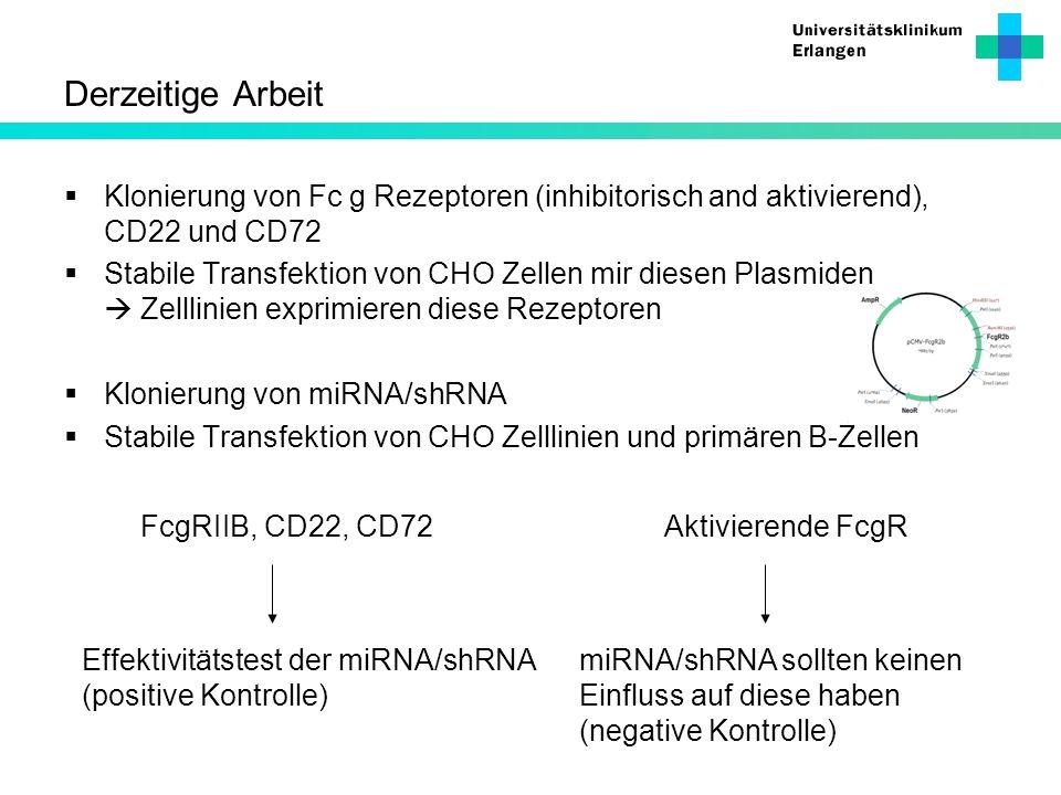 Derzeitige Arbeit Klonierung von Fc g Rezeptoren (inhibitorisch and aktivierend), CD22 und CD72.