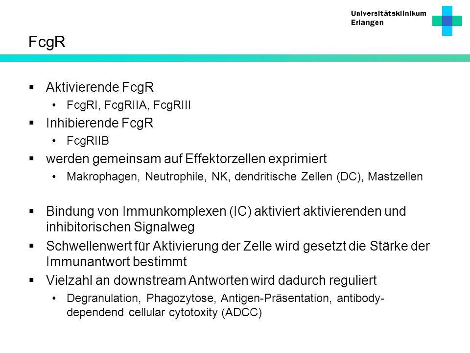 FcgR Aktivierende FcgR Inhibierende FcgR