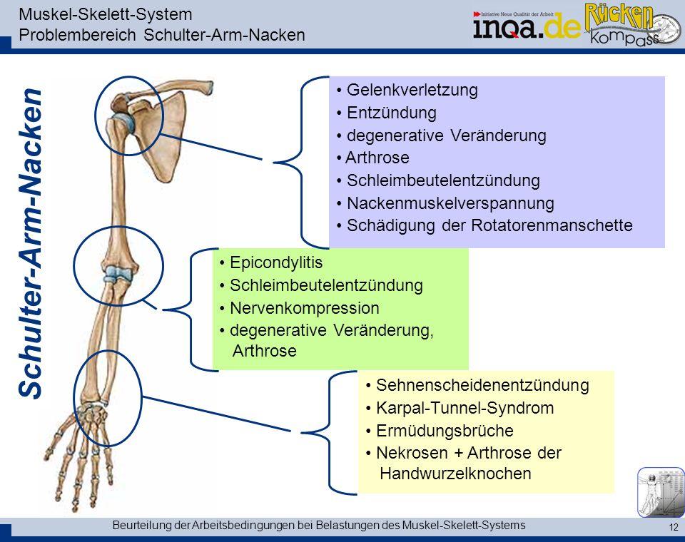 Muskel-Skelett-System Problembereich Schulter-Arm-Nacken