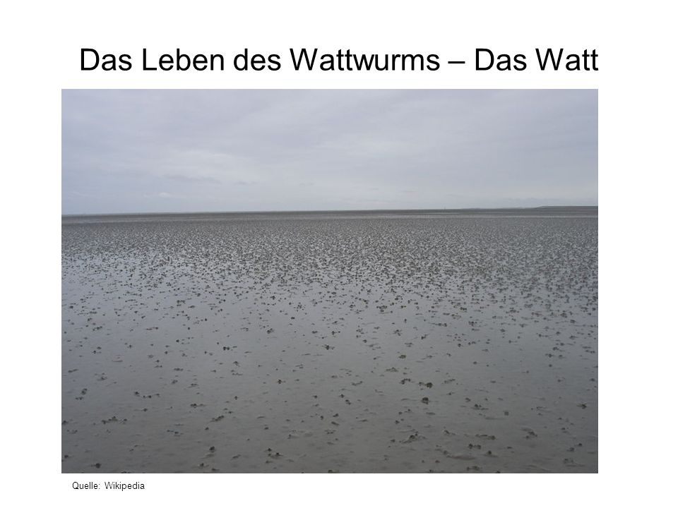 Das Leben des Wattwurms – Das Watt