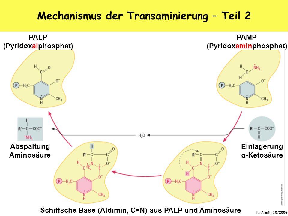 Mechanismus der Transaminierung – Teil 2