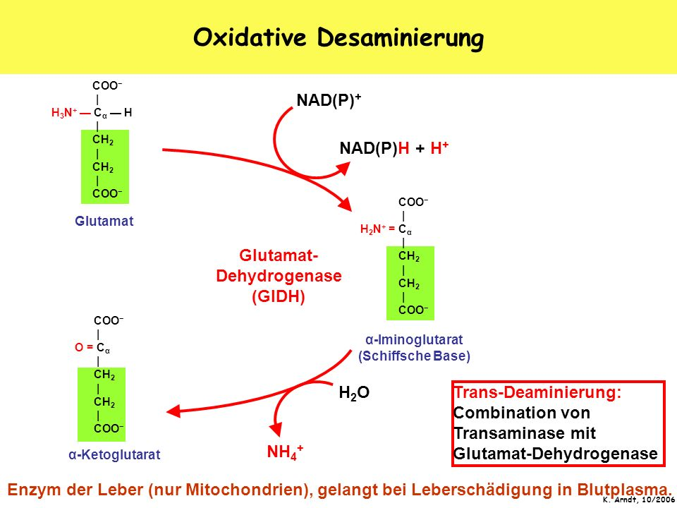 Oxidative Desaminierung