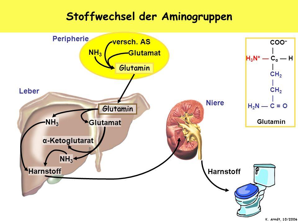 Stoffwechsel der Aminogruppen