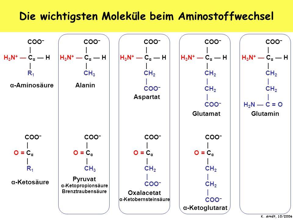 Die wichtigsten Moleküle beim Aminostoffwechsel
