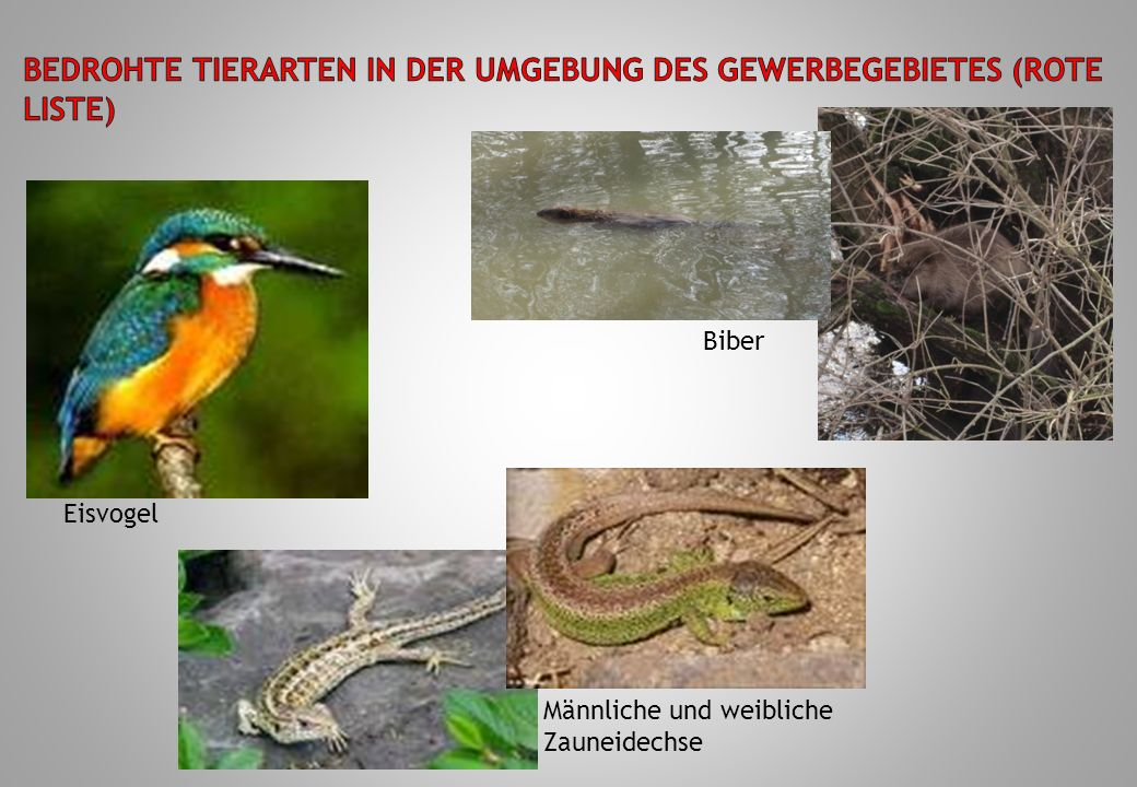 Bedrohte Tierarten in der Umgebung des Gewerbegebietes (Rote Liste)