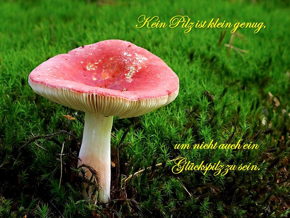 Kein Pilz ist klein genug,