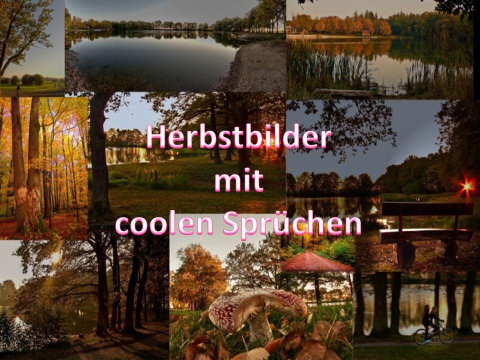 Herbstbilder mit coolen Sprüchen