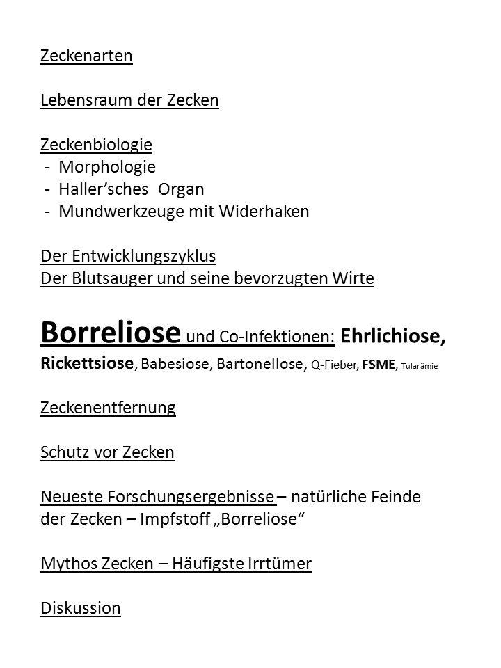 Zeckenarten Lebensraum der Zecken. Zeckenbiologie. - Morphologie. - Haller'sches Organ. - Mundwerkzeuge mit Widerhaken.