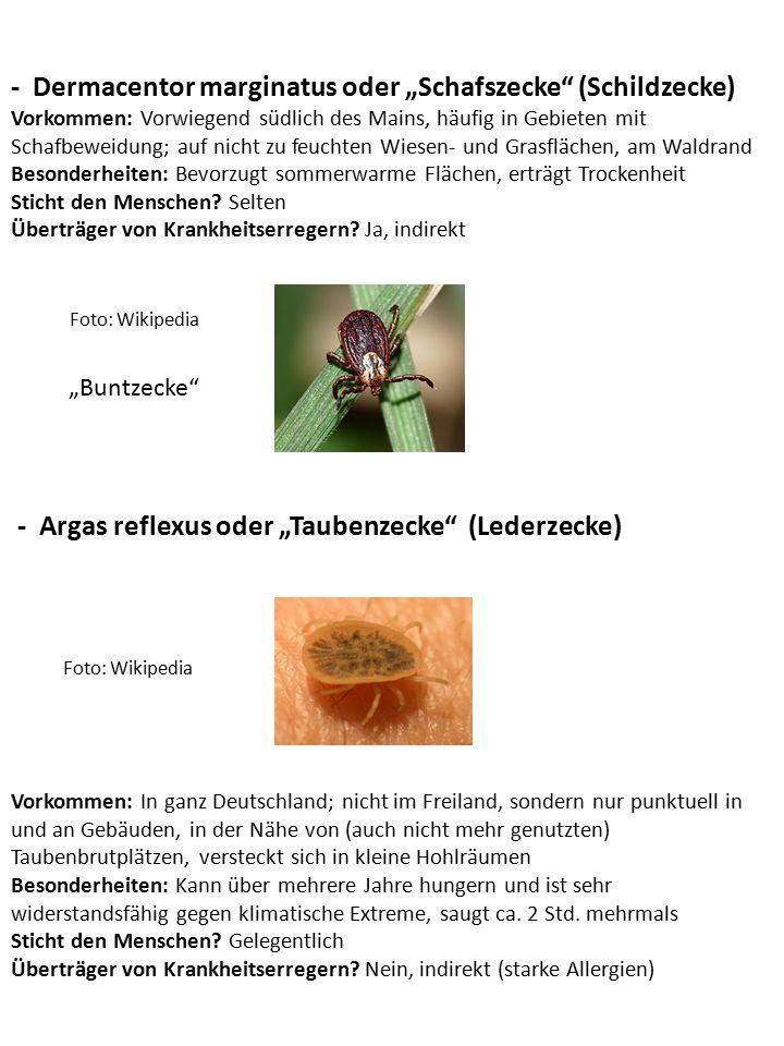 "- Dermacentor marginatus oder ""Schafszecke (Schildzecke)"