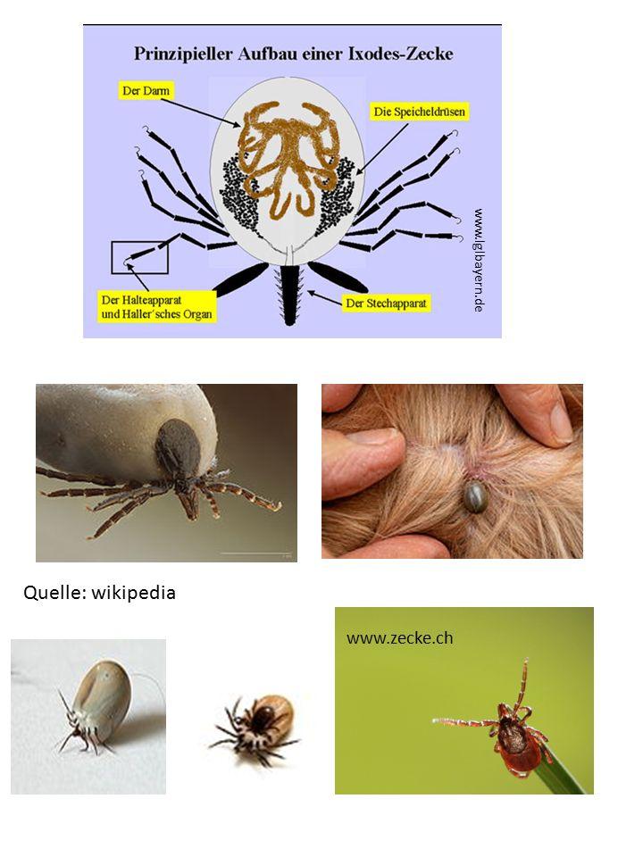 www.lglbayern.de Quelle: wikipedia www.zecke.ch