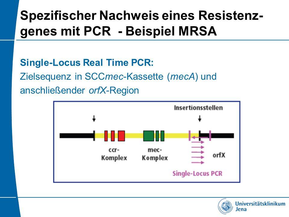 Spezifischer Nachweis eines Resistenz- genes mit PCR - Beispiel MRSA