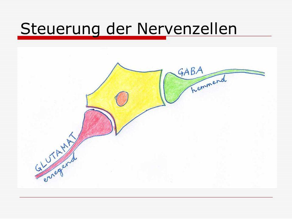 Steuerung der Nervenzellen