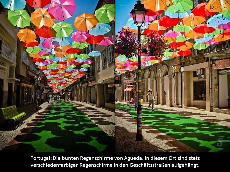 Portugal: Die bunten Regenschirme von Agueda
