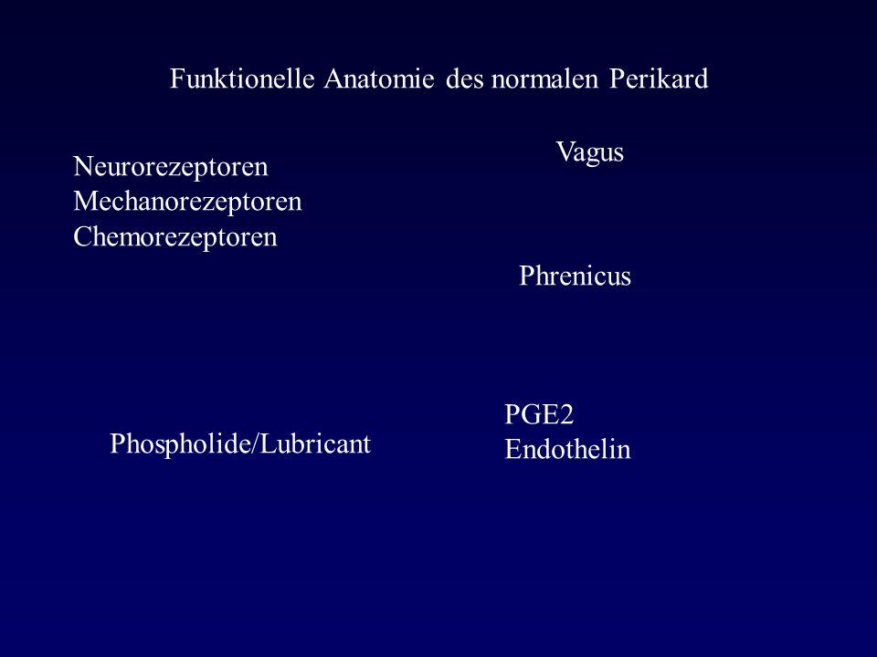 Funktionelle Anatomie des normalen Perikard