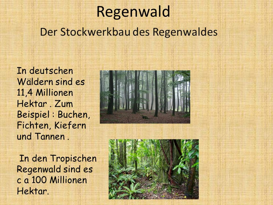 Der Stockwerkbau des Regenwaldes