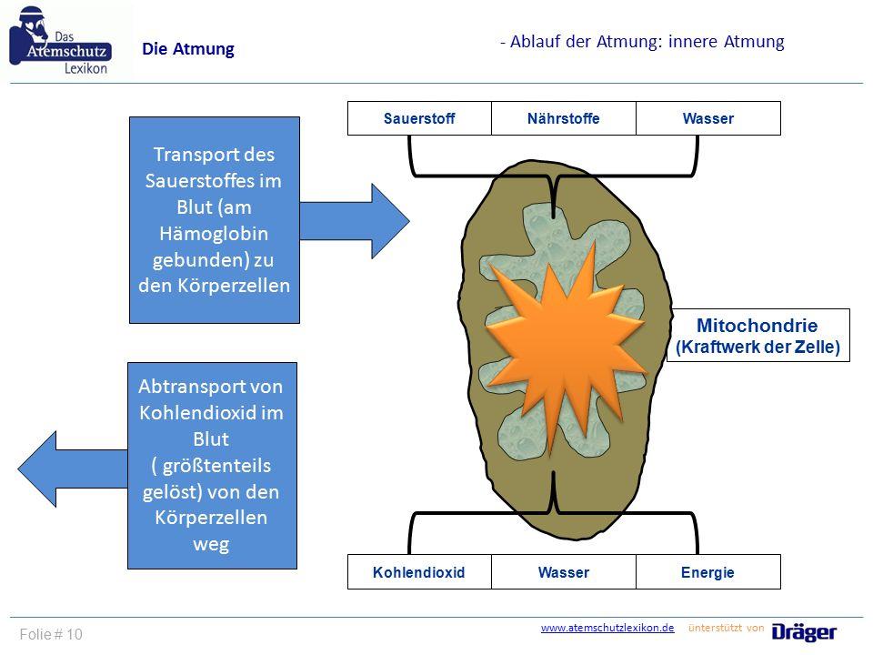 Atemberaubend Zellen In Dem Atmungssystem Fotos - Anatomie Ideen ...
