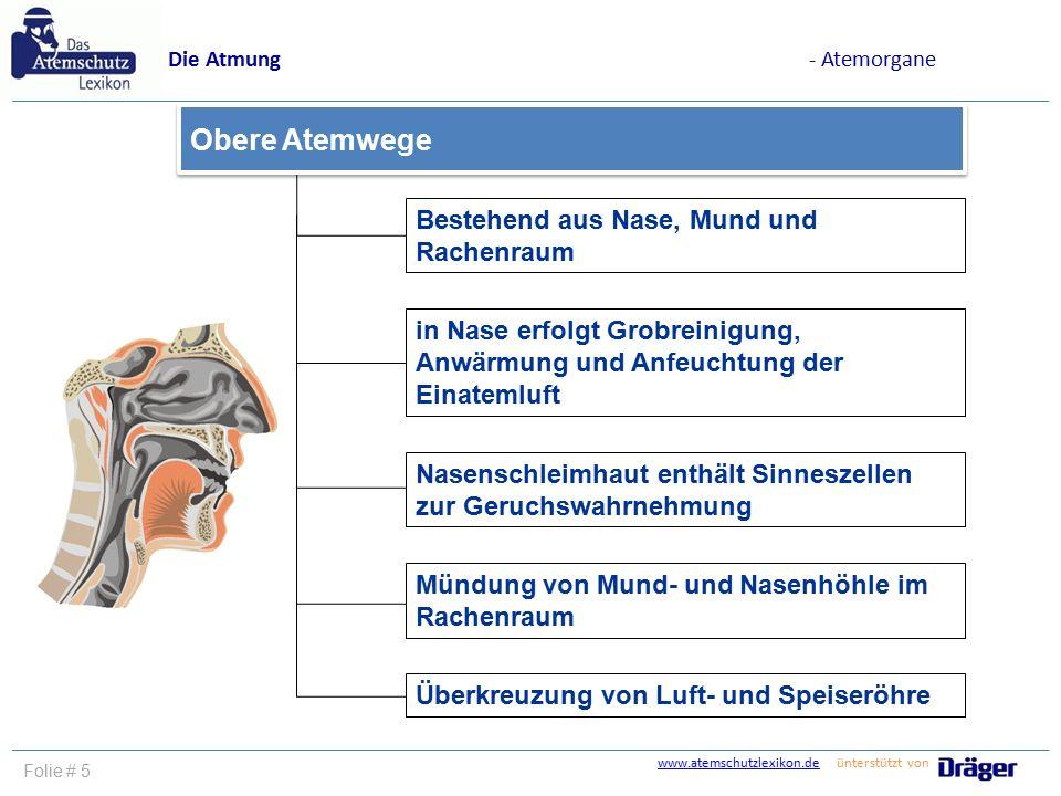 Nett Anatomie Der Luft Und Speiseröhre Ideen - Menschliche Anatomie ...