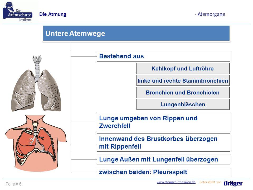 Fein Anatomie Der Lunge Und Der Atemwege Bilder - Menschliche ...