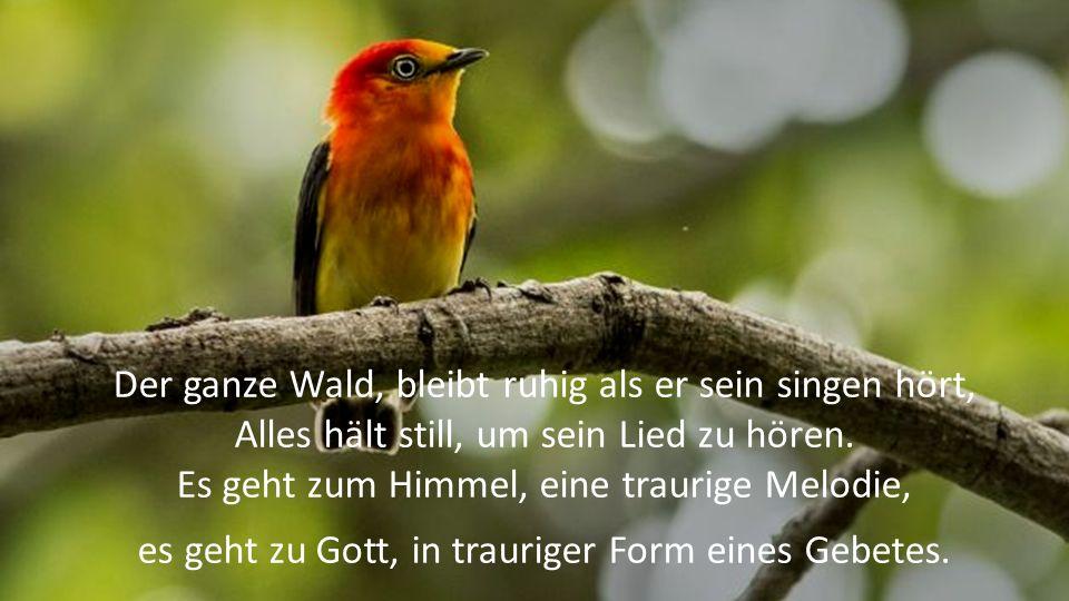 Der ganze Wald, bleibt ruhig als er sein singen hört, Alles hält still, um sein Lied zu hören.