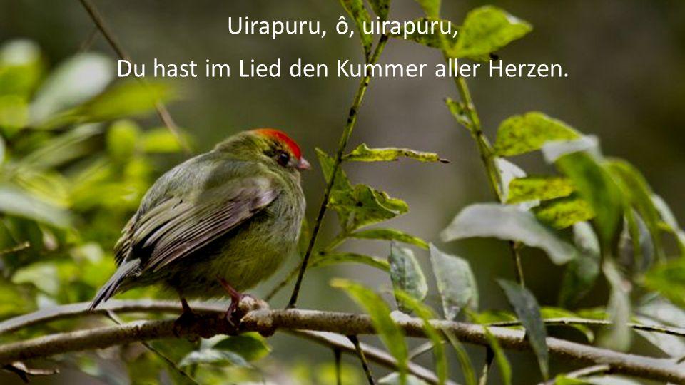 Uirapuru, ô, uirapuru, Du hast im Lied den Kummer aller Herzen.