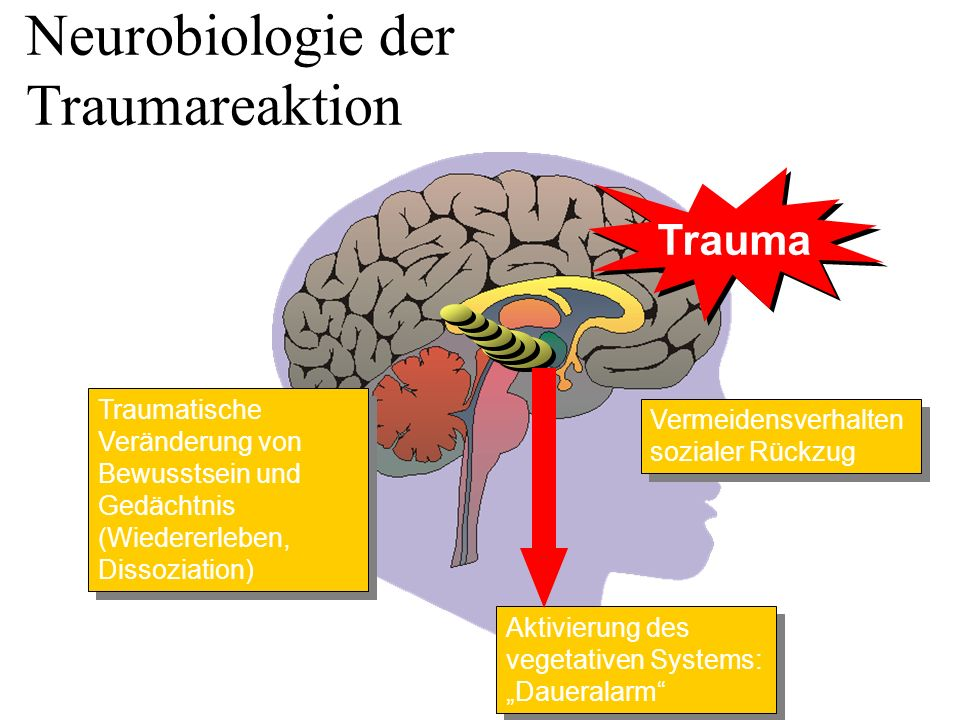 Neurobiologie der Traumareaktion