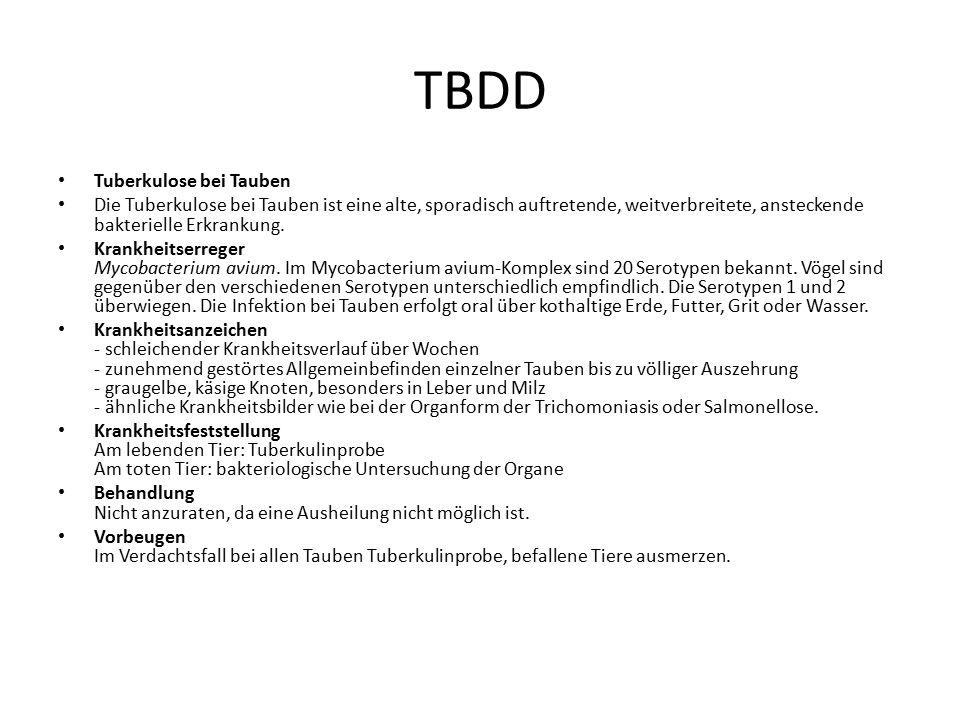 TBDD Tuberkulose bei Tauben