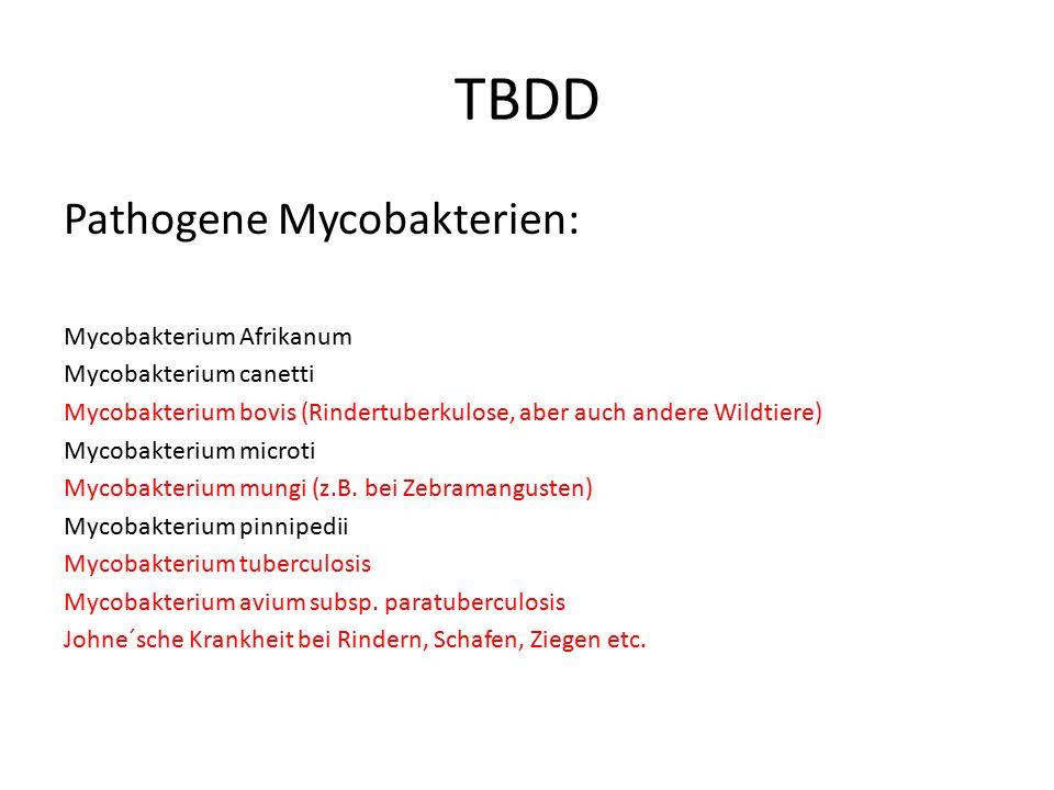 TBDD Pathogene Mycobakterien: Mycobakterium Afrikanum