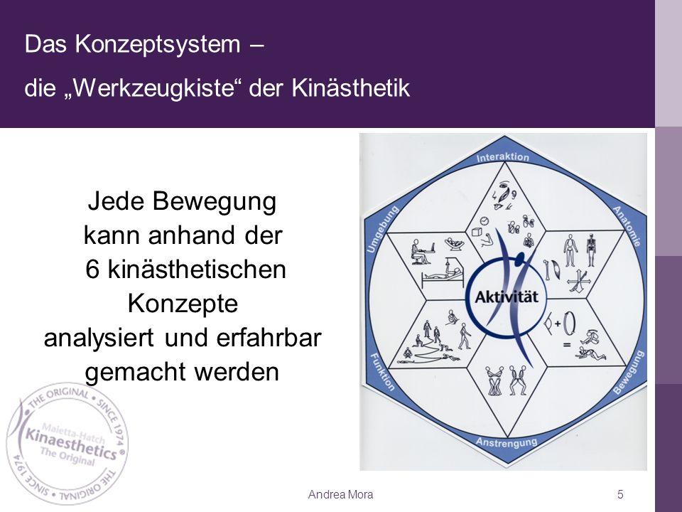 """Das Konzeptsystem – die """"Werkzeugkiste der Kinästhetik"""